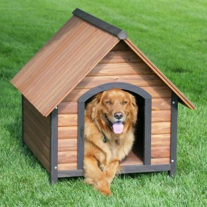 Dog house Blog Post