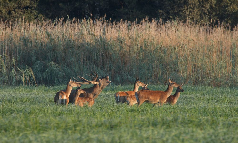PHOTO SAFARI TOUR! Explore the wilderness of the Kopački Rit Nature Park and spy on wild animals in their natural environment