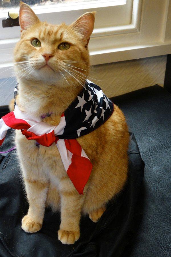 Street Cat Named Bob Imbd