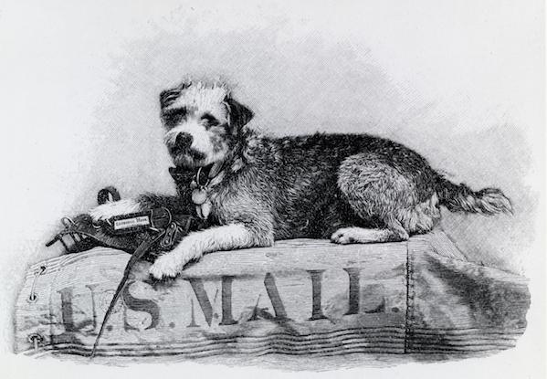 futilitydog