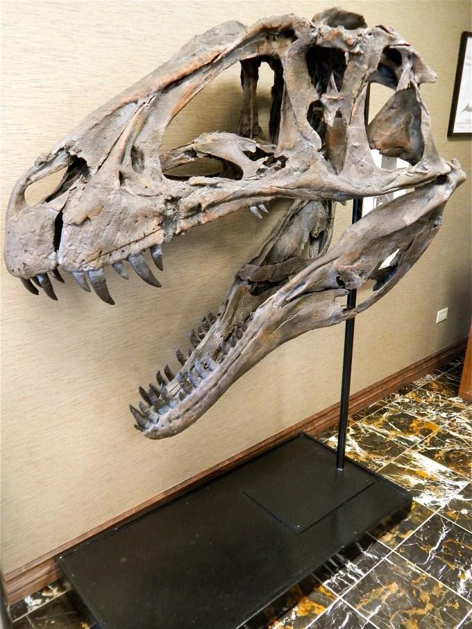 8_Acrocanthosaurus