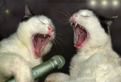Drunk-Karaoke-Cats
