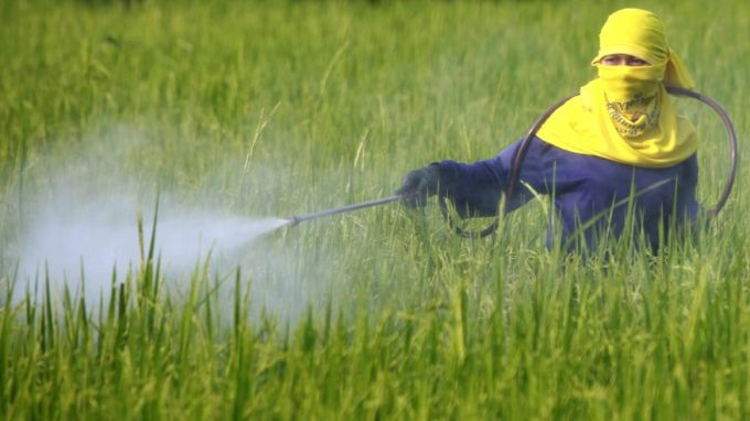 Ingredient in monsanto weedkiller roundup probably causes for Xeni jardin 2015