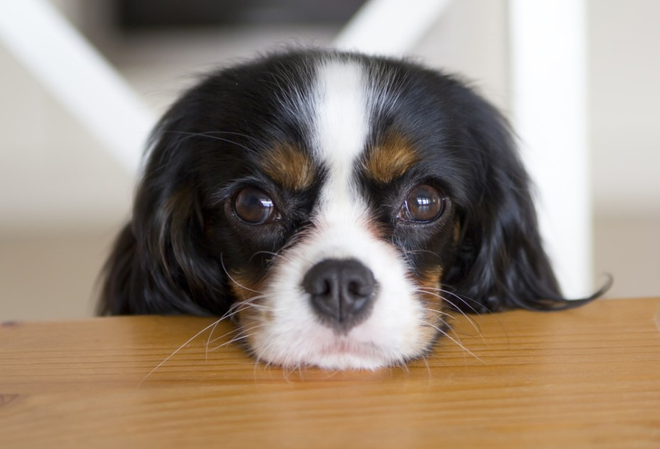Please love me. Image: Shutterstock