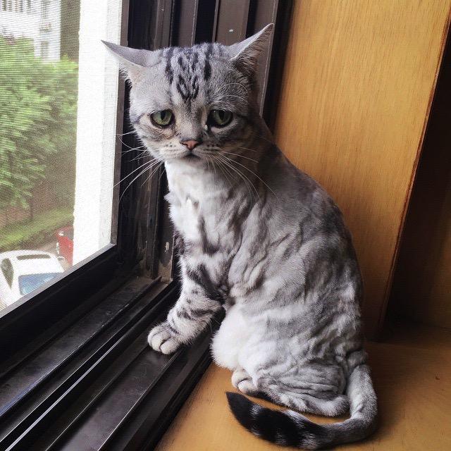 Sad-Cat-in-Window