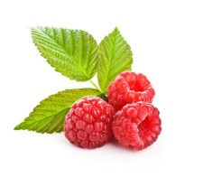 red-raspberry-isp_large