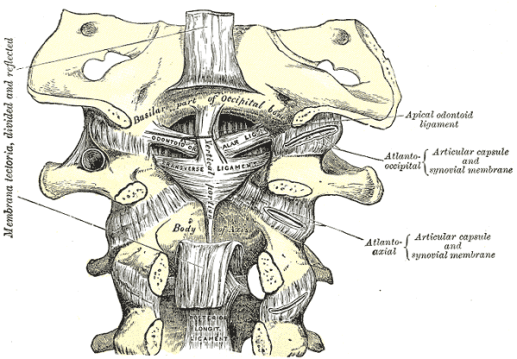 ligaments-upper-cervical-spine