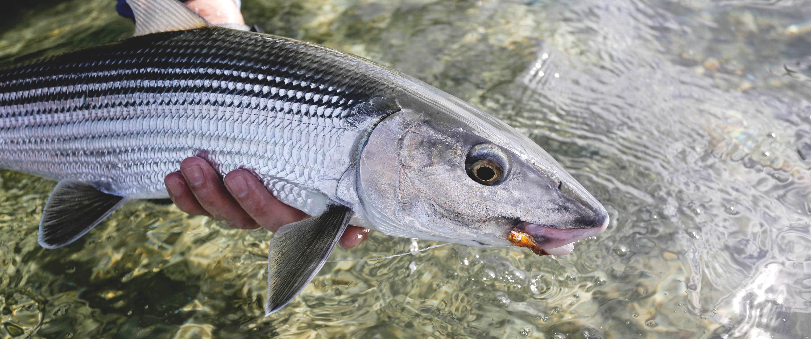 Hawaii fly fishing bonefish hawaii for Bonefish fly fishing