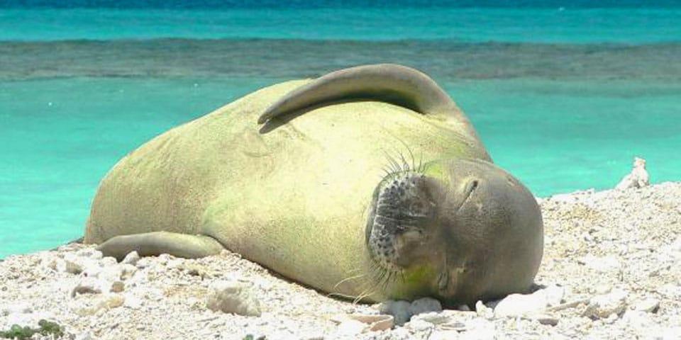 Papahānaumokuākea Marine National Monument Expanded