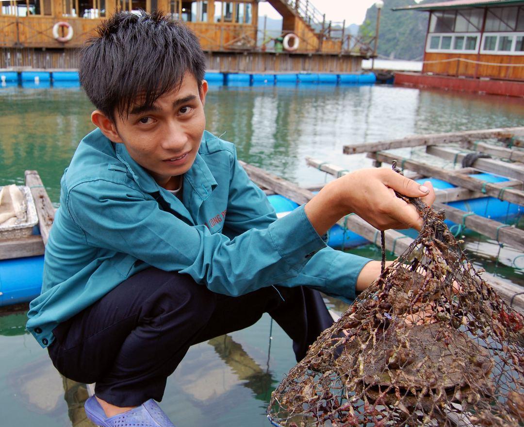 Pearl Farm in World Heritage Site Ha Long Bay in Vietnam