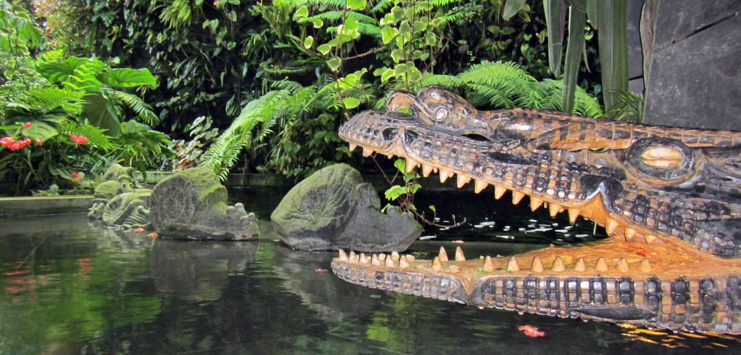 Crocodile and snails in the Cloud Forest in Singapore