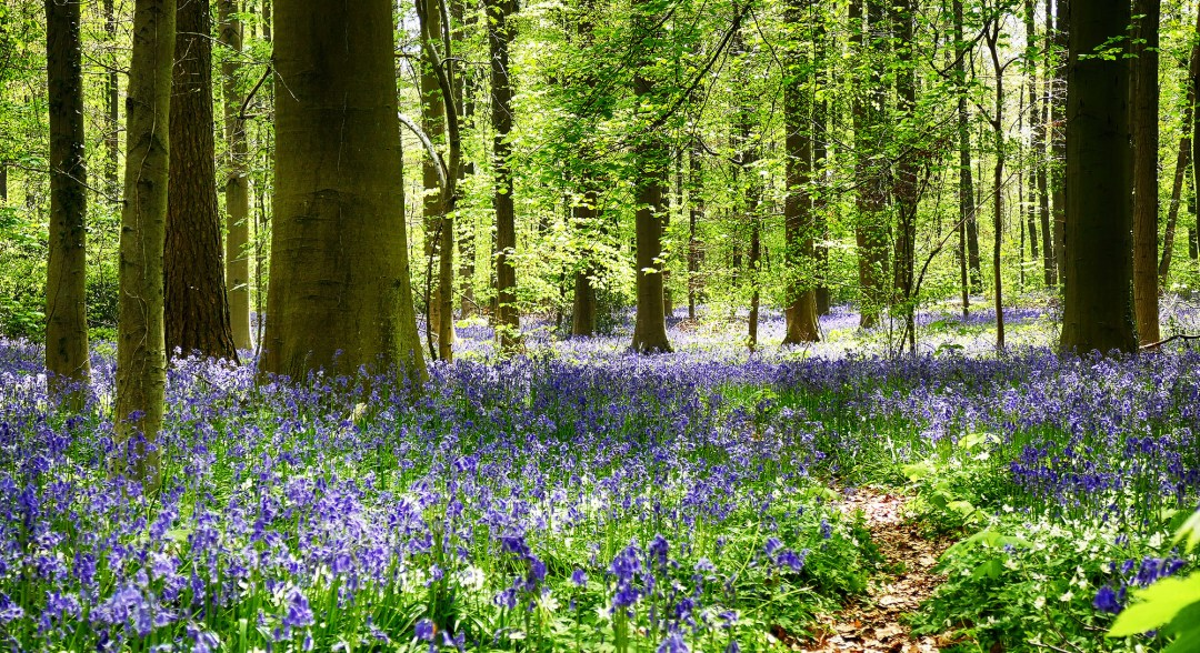 Blue Forest in Halle in Belgium