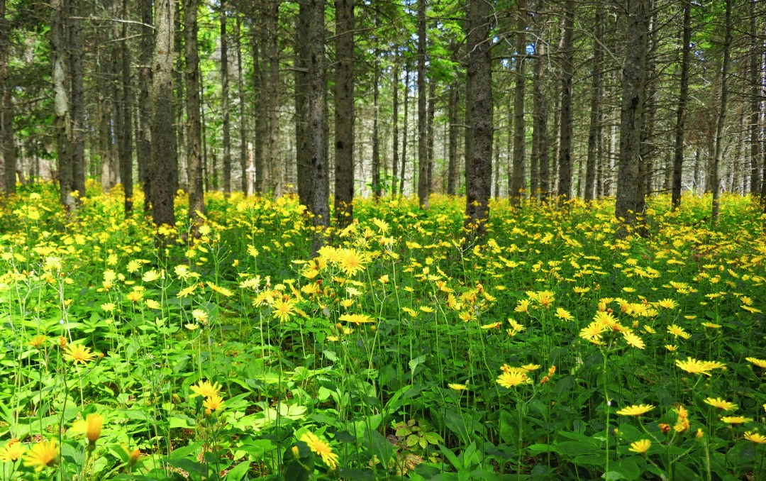 Yellow Forest in Arisaig Provincial Park