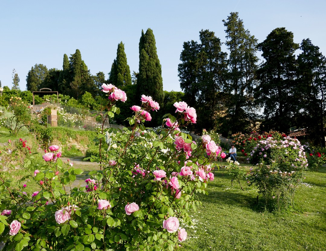 Rose Garden at sunset in Florence