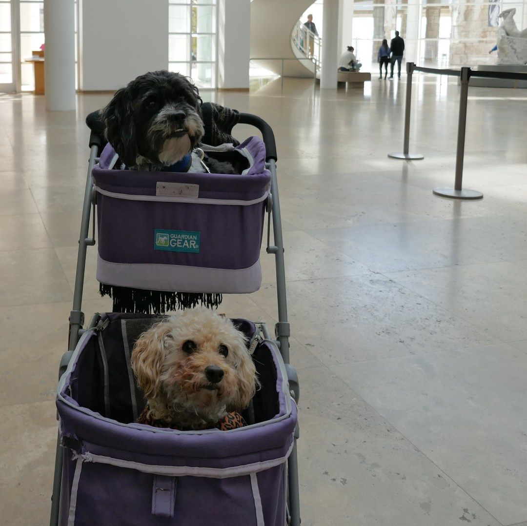 Getty Musuem dogs in stroller for boomervoice