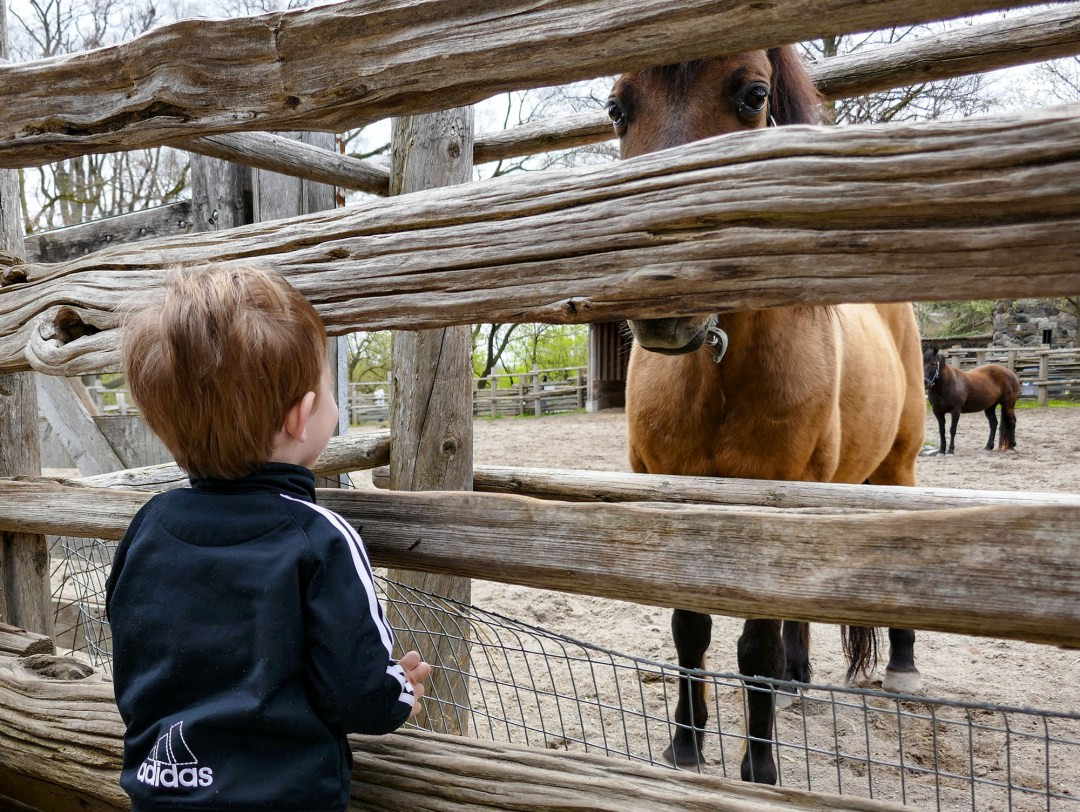 Grandson and horse for boomervoice