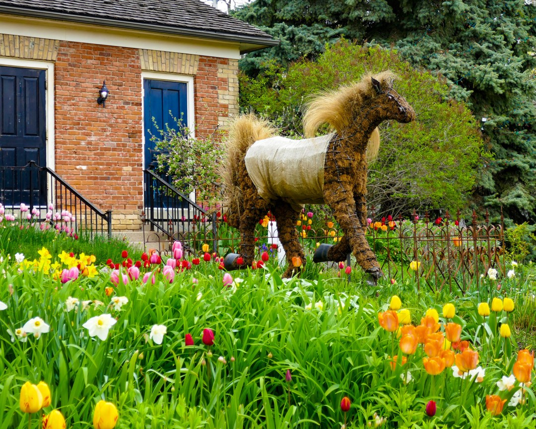 Riverdale Farm horse in Cabbagetown for boomervoice