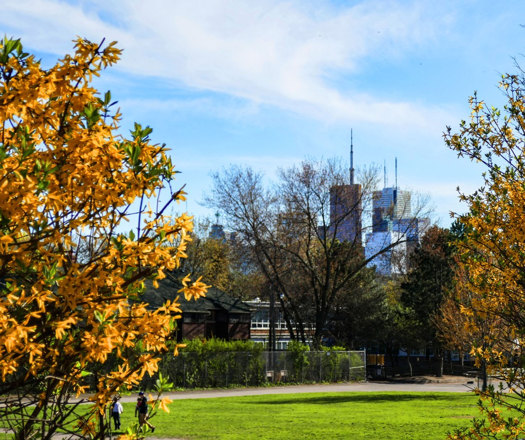 View of CN Tower from Cabbagetown for boomervoice