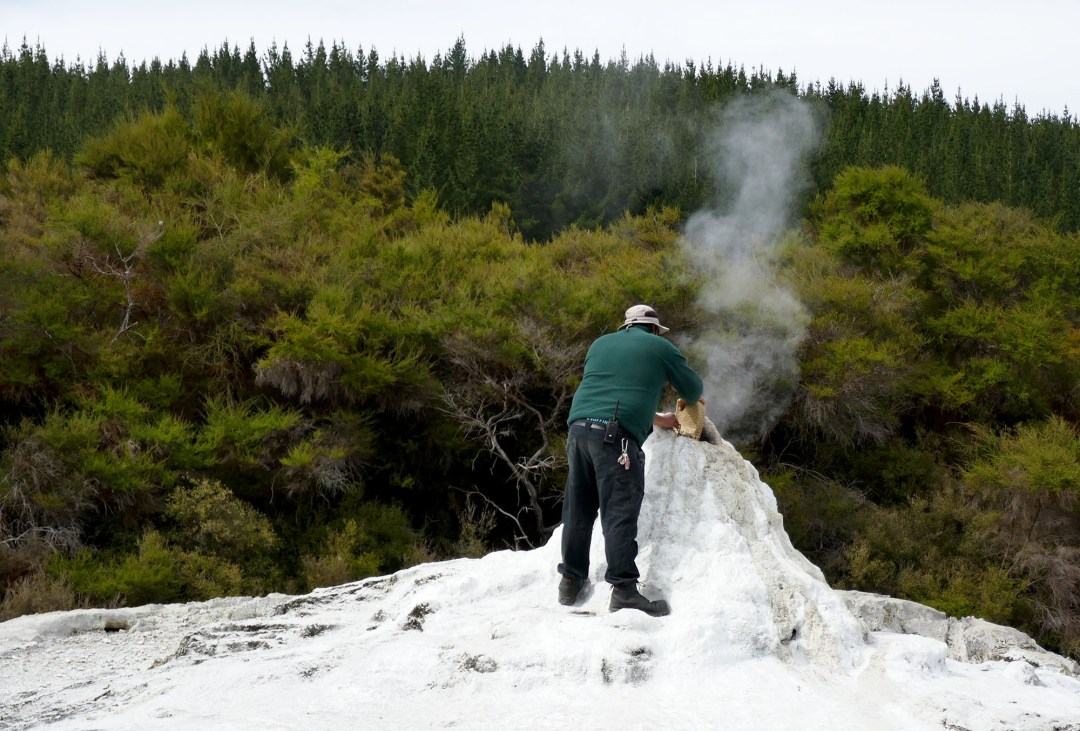 Feeding the Lady Knox geyser at Waiotapu Geothermal Park near Rotorua New Zealand for boomervoice