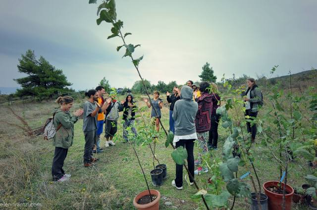 permacultura e food forest