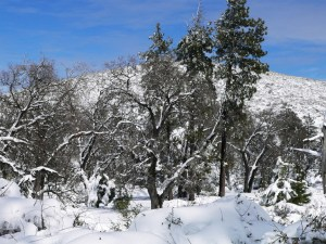 The 6000 foot high peak of Mt. Laguna stands tall under a blanket of snow. Photo Credit: Wendy Lemlin