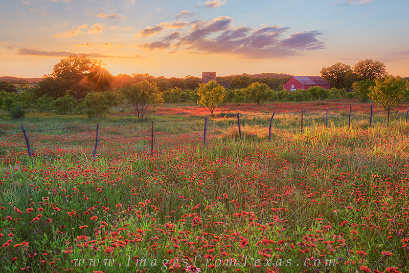 The last sunlight of day streams across a lonely field of Texas wildflowers - this time red firewheels. On a stretch of dirt road north of Llano in the Hill Country, scenes like this were everywhere in May. The hard part was picking a location for the moment of sunset.