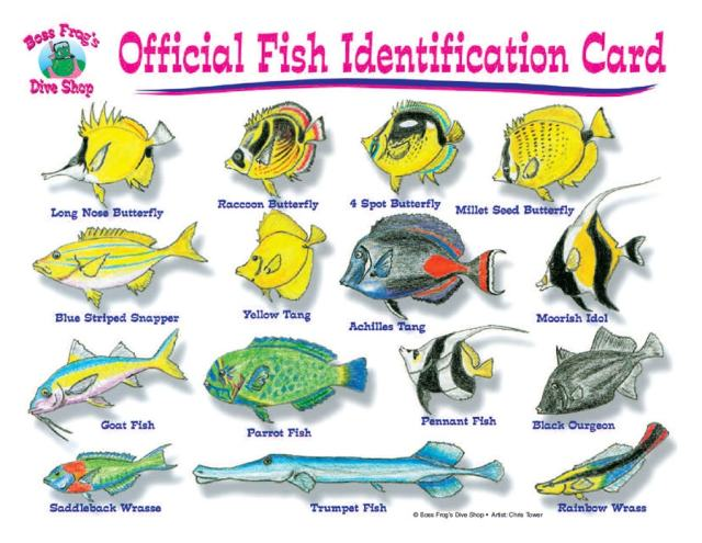 Big Island Tropical Fish Guide Snorkel Rentals In Kona