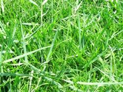 Small Of Bermuda Grass Killer