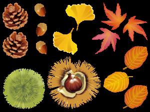 秋,どんぐり,栗.落ち葉,紅葉,松ぼっくり