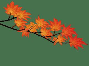 maplrred,紅葉,秋