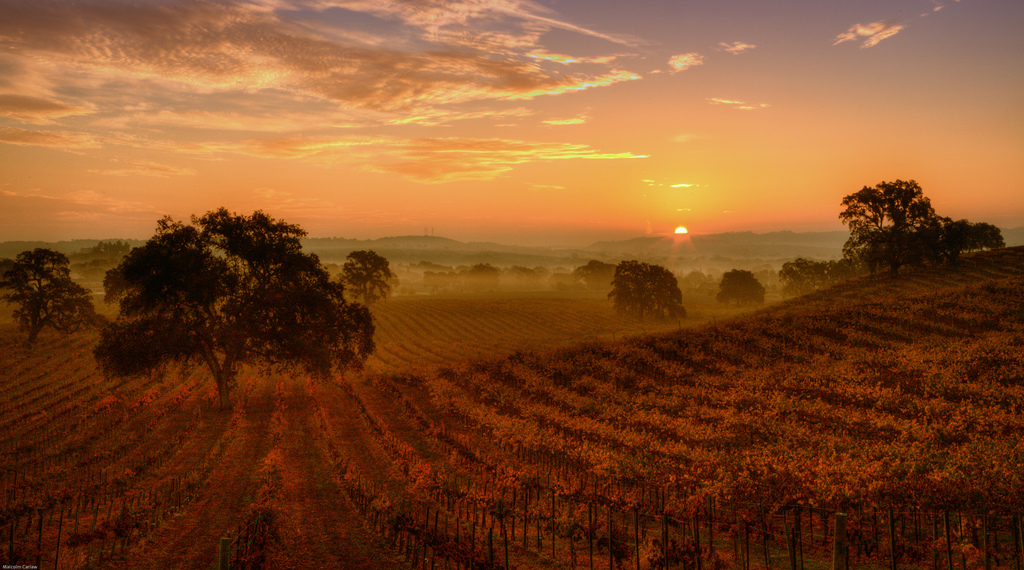 What Sustainability Means in the California Wine Industry