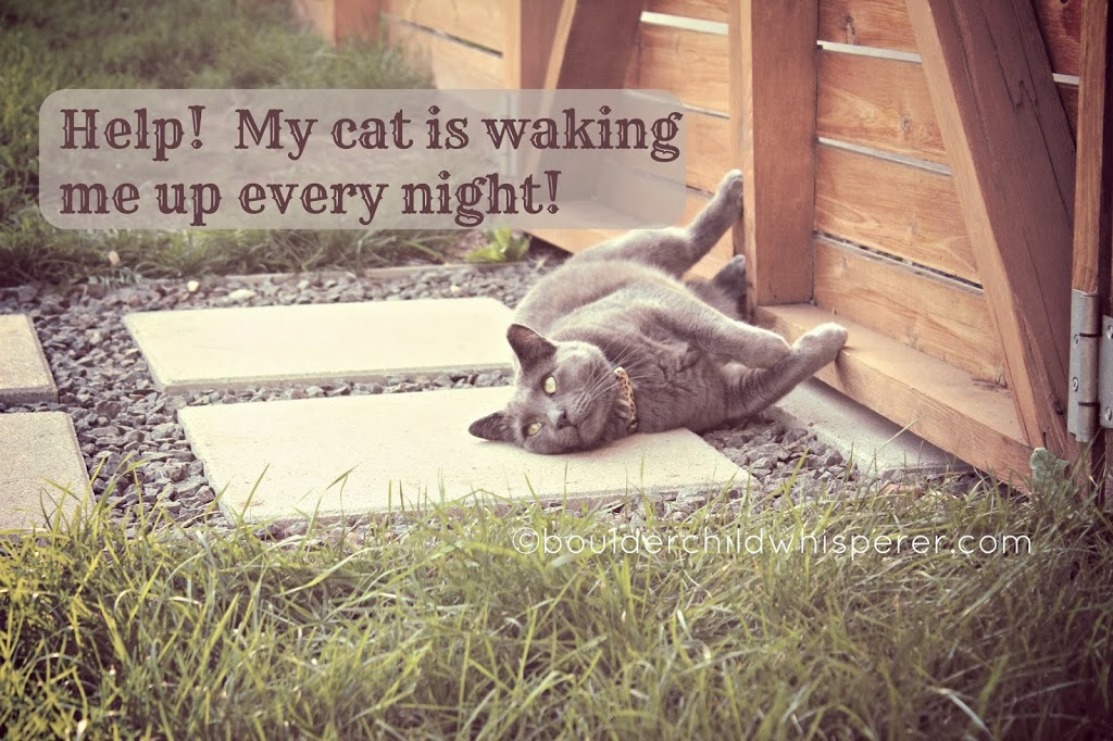 Help! My cat is waking me up every night...