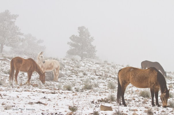 Horses Winter Snow and Fog Scenic Landscape