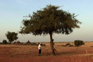 CCS_deserttree