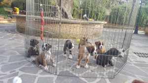 cuccioli 3