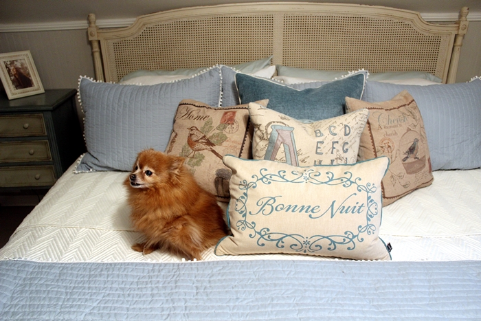bed with Rosie the Pomeranian