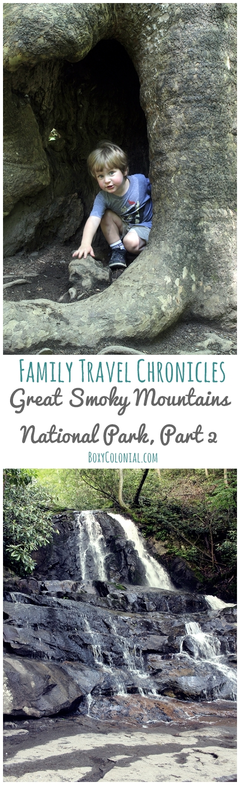 Part three of our trip report about going to the Great Smoky Mountains National Park with kids; Cades Cove, traveling with dogs, Junior Ranger badges, Laurel Falls
