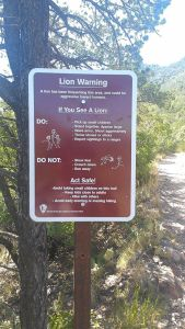 lion sign lost mine trail