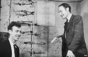 Crick & Watson