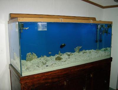 Aquariums: My 240 Gallon Saltwater Fish Only With Live Rock Aquarium