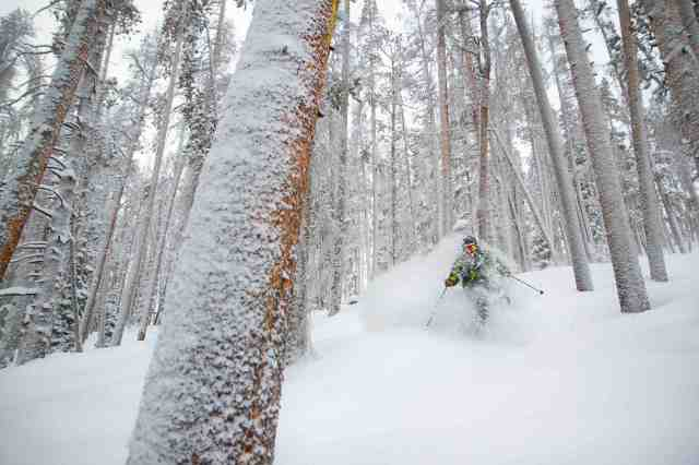 Mary jane tree skiing