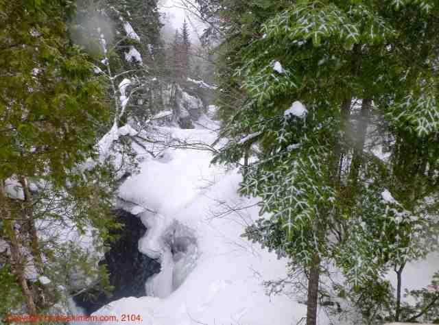 québec woods