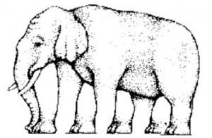 optical-illusion-elephant