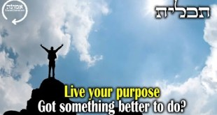 Live your purpose  | Got something better to do?