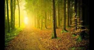 התבודדות -גיא גרידיש – שיעור חזק