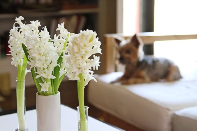Brewed-Together-Hyacinth-Tube-Bouquets-8