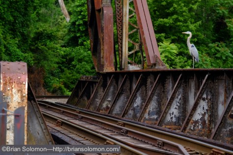 Southern_Railway_Bridge_w_Heron_Great_Shiplock_Park_Richmond_DSCF0030