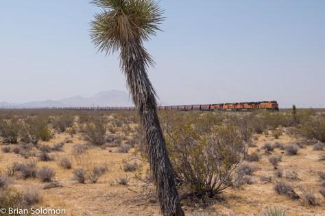 BNSF_earthworm_grain_train_Mojave_w_Joshua_Tree_DSCF0987