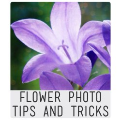 Flower photo tips and tricks