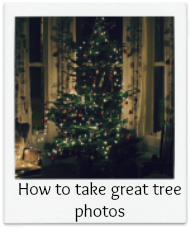 How to take great tree photos